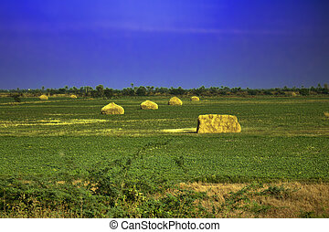 field of agriculture in India. green expanses of countryside...