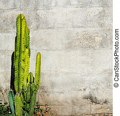Background block wall has cactus tree green color.