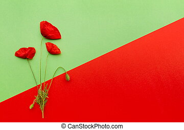 Floral red green card - Poppy flower on red and green...