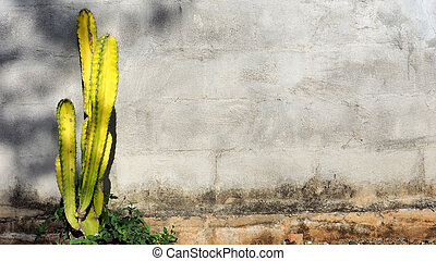 Background block wall has yellow cactus tree and small...