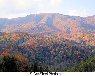 Asheville in the fall