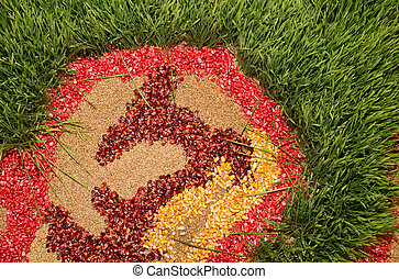 Colorful cereal seeds - Top view of cereal seeds and wheat...