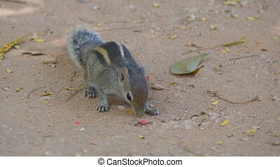 Chipmunk in park eating seeds. Close up.