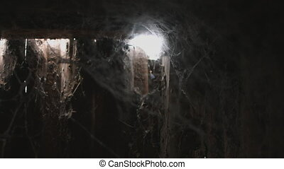 cobweb or spider web