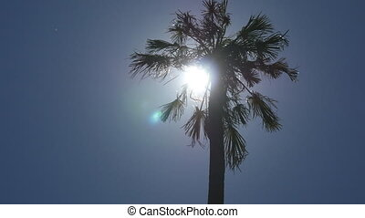 Sun shining through palm in Sri Lanka. The wind shakes the trees. Sun Rays make their way through leaves. Bottom view. Close up.
