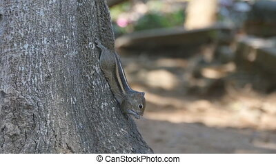 Chipmunk sitting on a tree trunk in the park eating seeds....