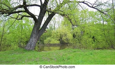 summer nature with trees and river