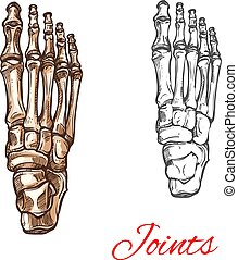 Vector sketch icon of human foot bones or joints - Human...