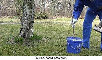 gardener mix whitewash liquid in blue bucket near apple...