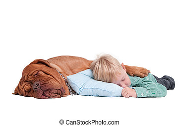 Boy and dog asleep on the floor - Big dogue de bordeaux...