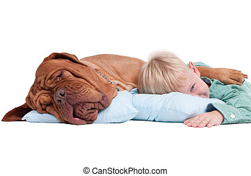 Boy with a dog on the floor - Big dogue de bordeaux and...