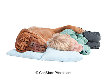 Two friends asleep on the floor - Big dogue de bordeaux and...