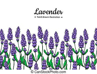 Lavender vector drawing border. Isolated wild flower and...