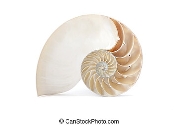 Nautilus shell and famous geometric pattern - A perfect and...