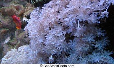 Coral reef, Underwater life,