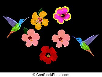 hummingbird flowers - vector hummingbirds and tropical...