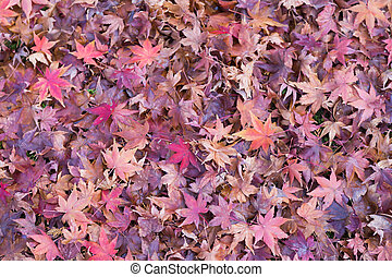 Beauty of maple leaves on the floor during autumn