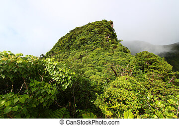 Rainforest of Saint Kitts - A cloudy rainforest peak in the...