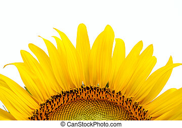 Yellow sunflower on plant