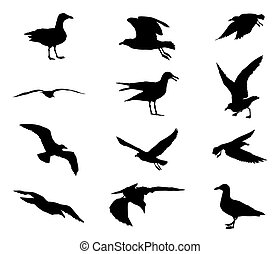Set of silhouettes of seagulls in black color isolated on...