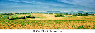 Panorama of Alsace rolling landscape with lines of sprouts....