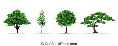 tree set realistic vector illustration - trees and leaf set...