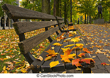 Fall Leaves on Benches Along Park