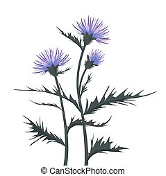 Thistle with leaves - Vector Illustration thistle with...
