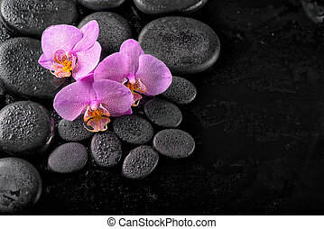 spa composition of blooming twig orchid flower with water...