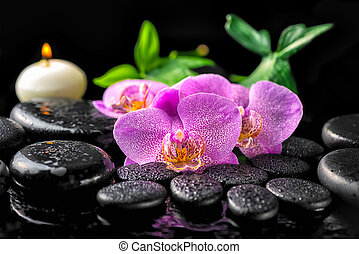spa setting of blooming twig lilac orchid flower, green...