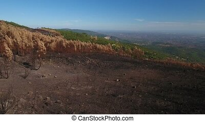 Aerial. Flying a drone over a burnt forest. Portugal...