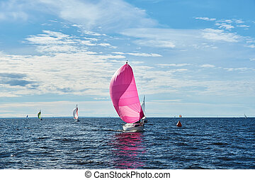 Yacht with pink spinnaker - Yachting race. Sailing regatta....
