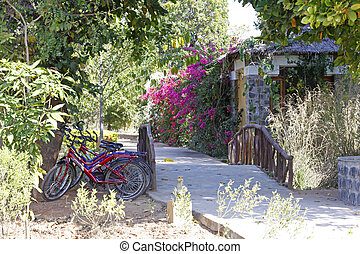 Bicycles In The Garden - Three bikes parked under a shady...