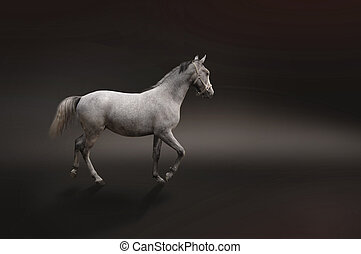 灰色, 馬, 黒, 隔離された