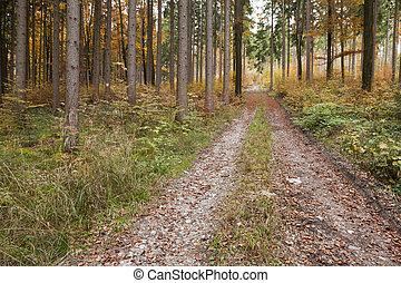 Ősz, Erdő