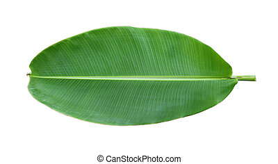Fresh whole banana leaf isolated on white background