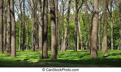 Slowly sliding camera in the park with trees in spring time