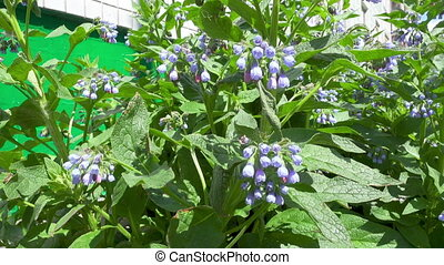 Spring blue flowers. FHD real time video