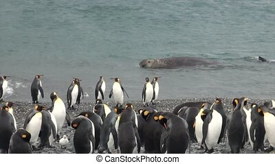 Imperial penguins background of diving seals in ocean of...