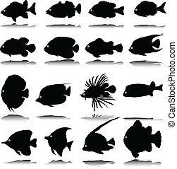 exotic fish vector silhouettes