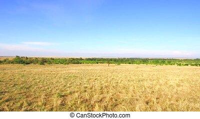maasai mara national reserve savanna at africa - nature,...