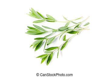 Sprig of fresh thyme isolated on a white background