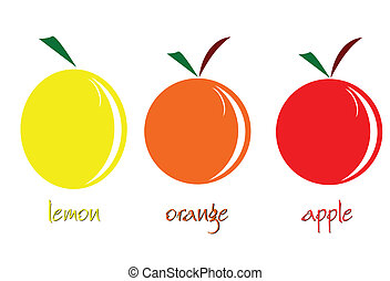 fruit vector illustration