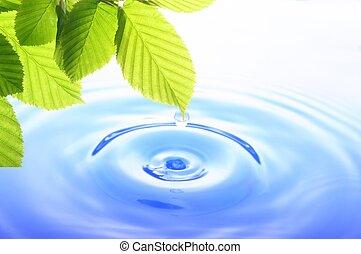 verde, folha, água, gota