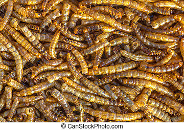Dry mealworm larvae background suitable as food