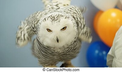 White polar owl indoors at the party