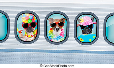 vacation dogs in airplane
