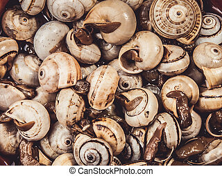 cooked snails, escargots served rustic, typical spanish tapa