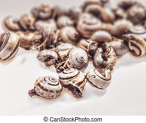 cooked snails, escargots on white background