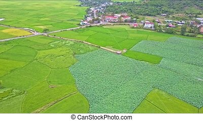 Aerial Panorama of Landscape with Rice Fields Road and Town...